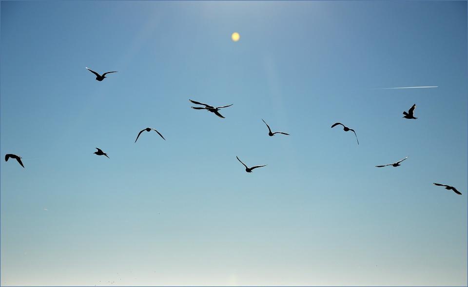 imagem de pássaro voando livremente